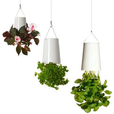 Комнатные растения в подвесных вазонах Sky Planter в интернет-магазине Plant-Palace