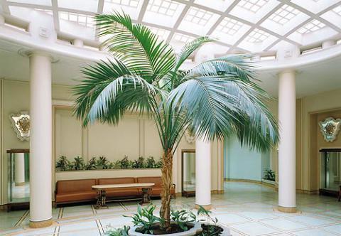 Комнатные растения пальмы купить в интернет магазине Plant Palace.ru