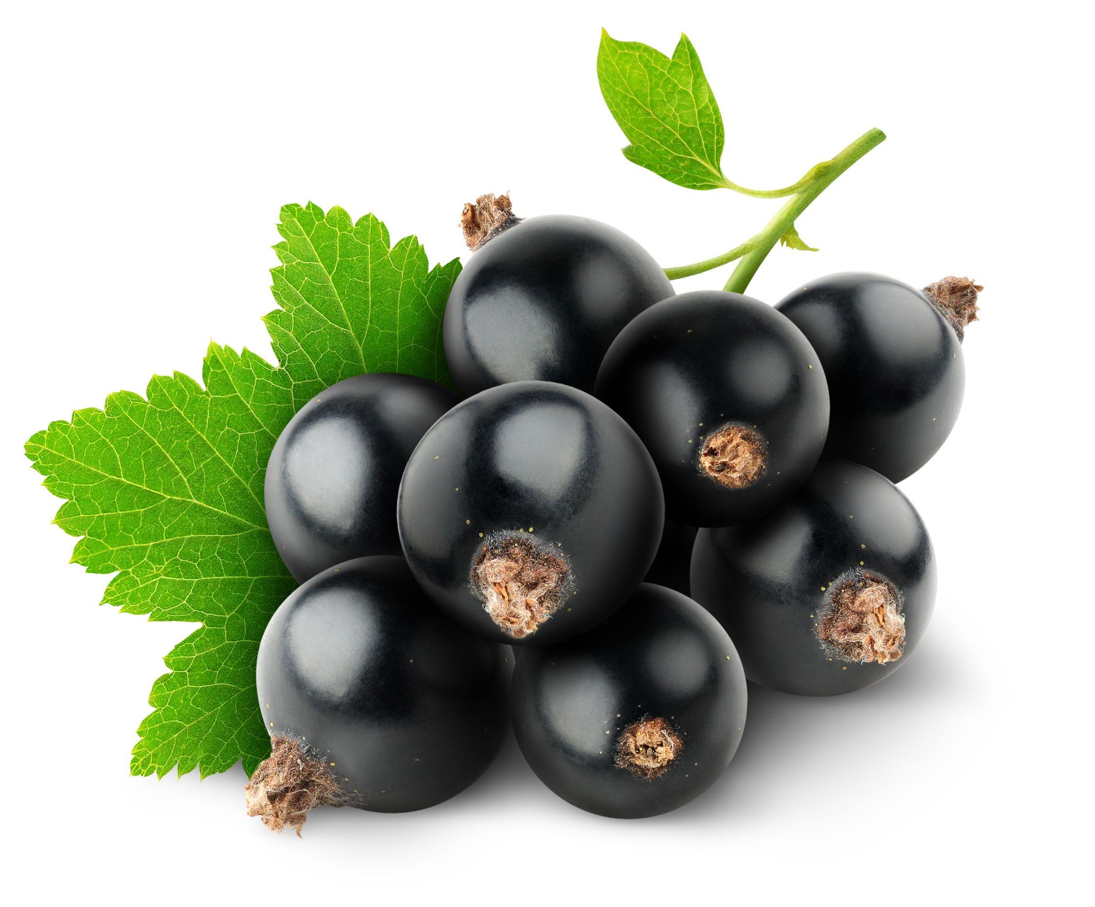 Черная смородина полезные свойства