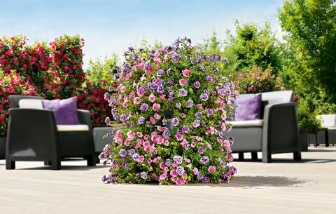 Комнатные растения в цветочной горке на терассе в интернет-магазине Plant-Palace.ru