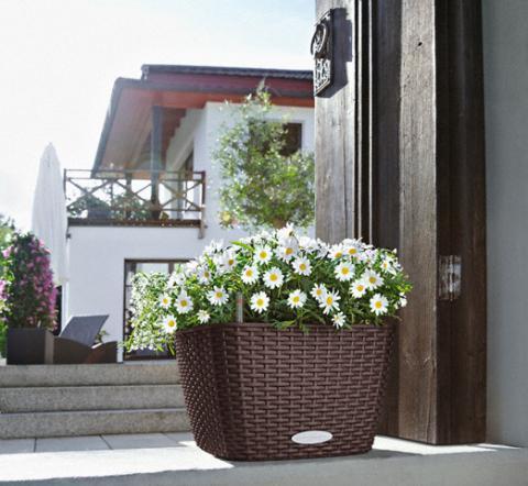 Комнатные растения в виде корзины с цветами на пороге вашего дома в интернет-магазине Plant-Palace.ru