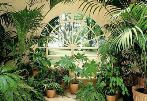 Растения для зимнего сада и их основа пальмы в интернет-магазине Plant-Palace.ru