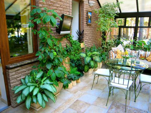 Растения для зимнего сада в интернет-магазине Plant-Palace
