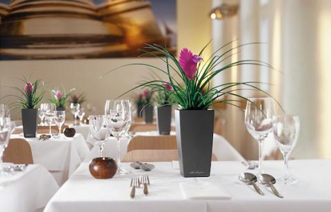 Комнатные растения на столиках в кафе и ресторанах в интернет-магазине Plant-Palace.ru