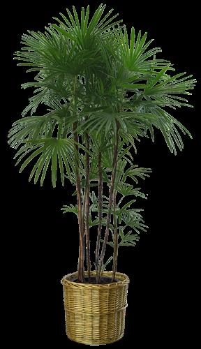 plant-palace-slider-3.png