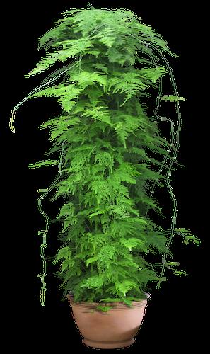 plant-palace-slider-4.png