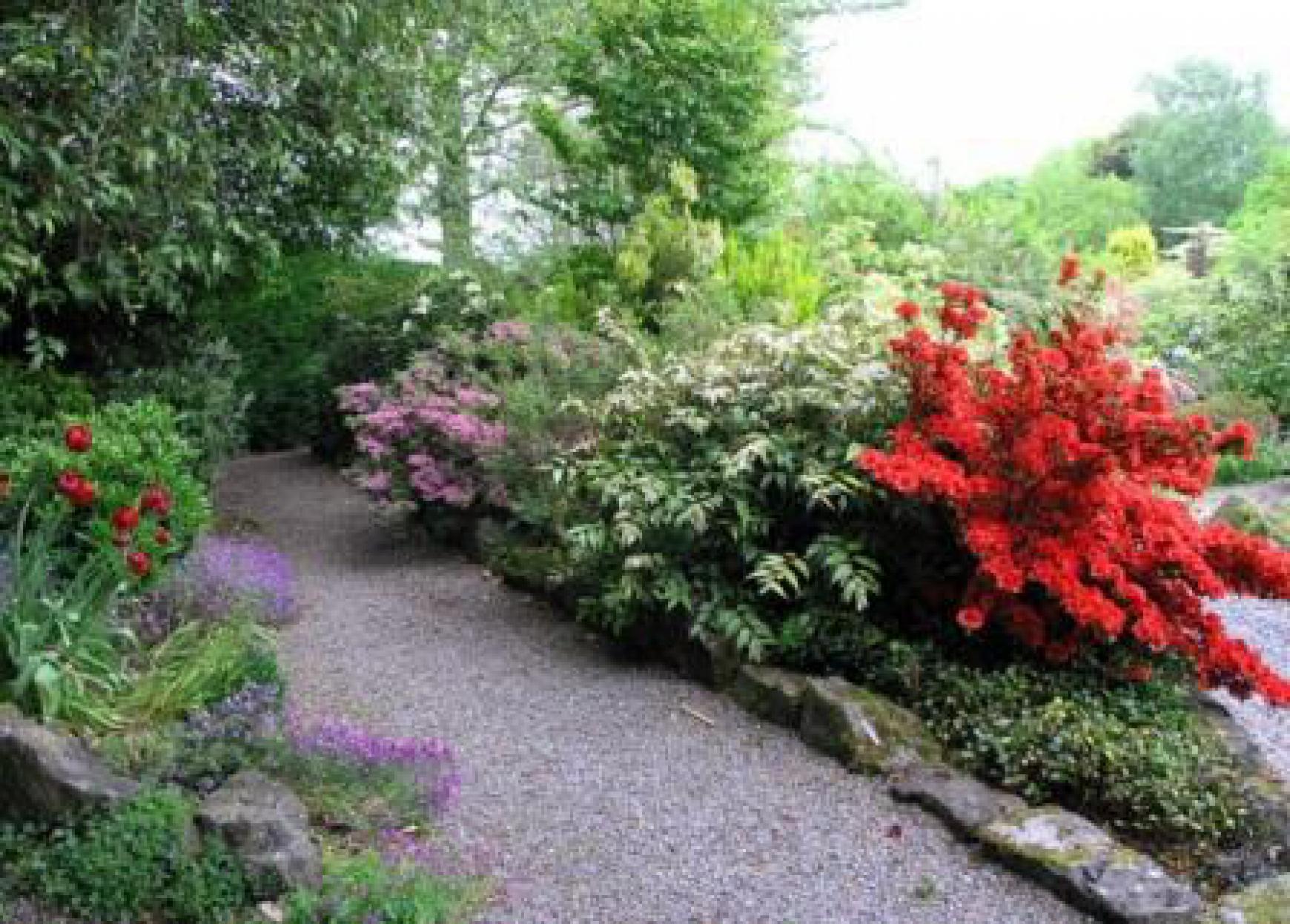 Цветы газонные цветущие фото
