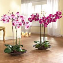 Комнатные растения орхидеи купить в интернет магазине Plant Palace.ru