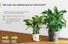 Комнатные растения в кашпо Lechuza